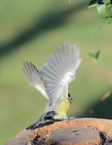 IMG_2463 szűrnya-szárnya a madárnak